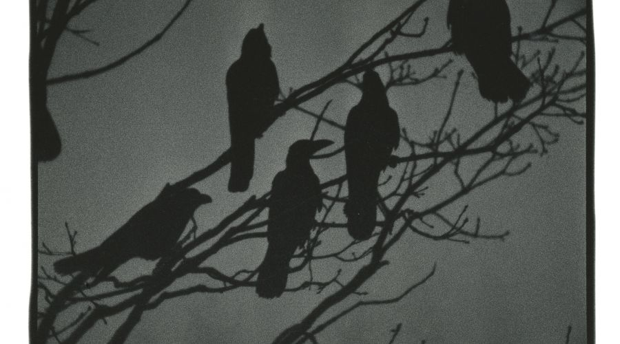 Masahisa Fukase: The Solitude of Ravens