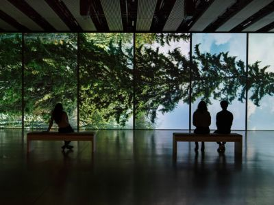 Among the Trees | Hayward Gallery | 01 Aug - 31 Oct